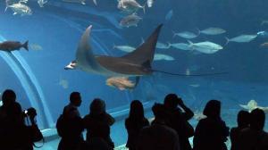 aquarium3-1-2.jpg