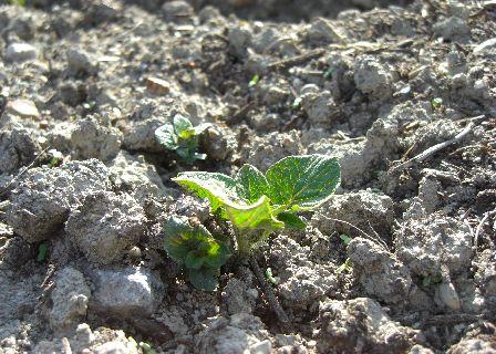 farmpotato01.jpg