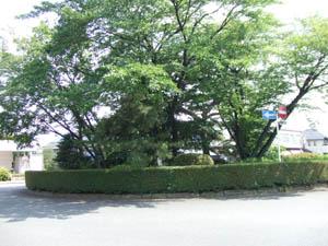 2008_06150144.jpg