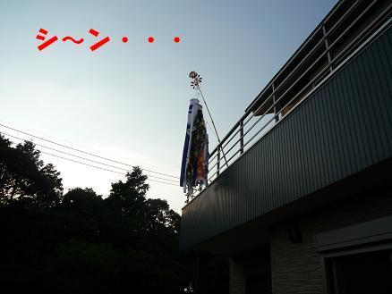 P1020499bg
