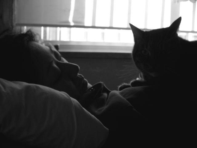 猫と嫁白黒