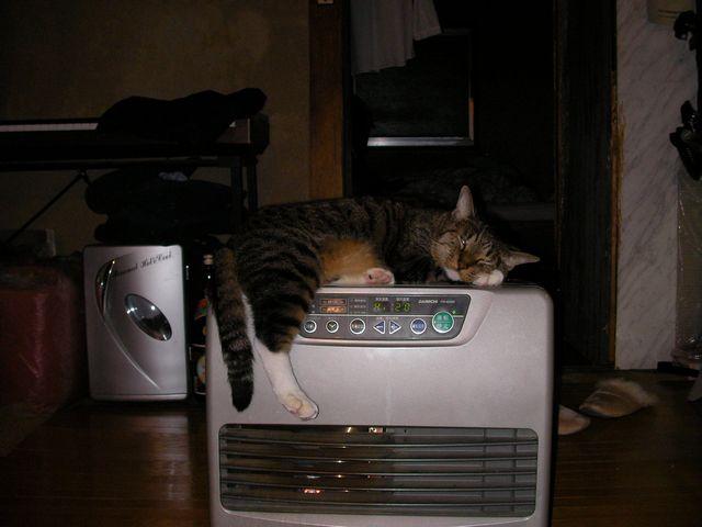 猫ストーブ002