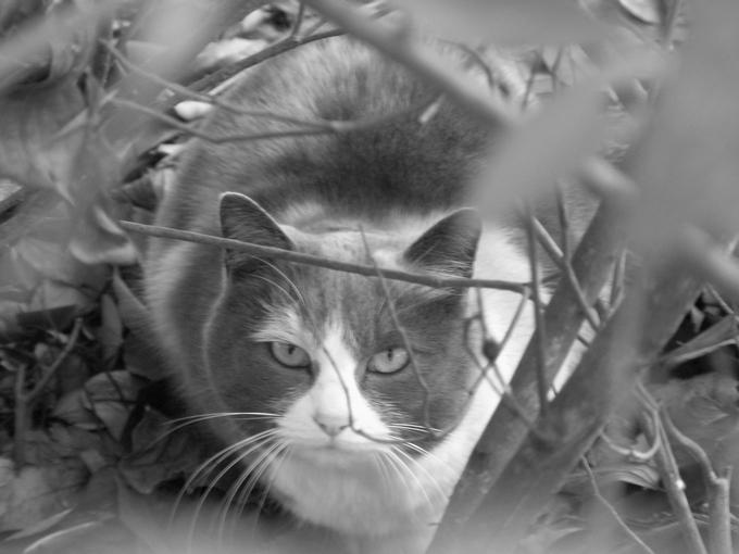 猫白黒web