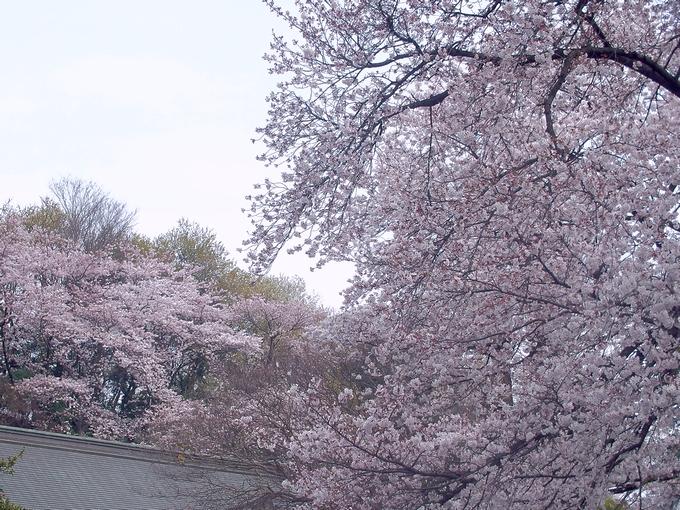 桜もおわったし