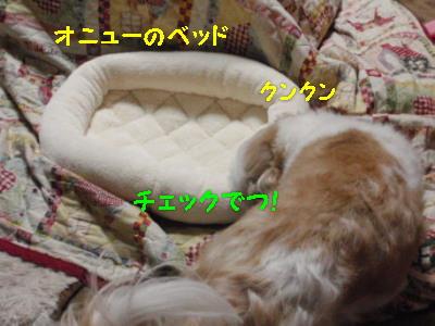 P4181303.jpg