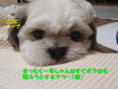 P7151334.jpg