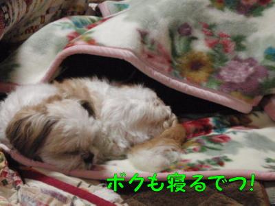 PA230599.jpg