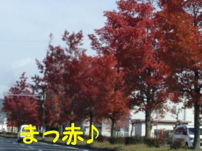PB160916.jpg