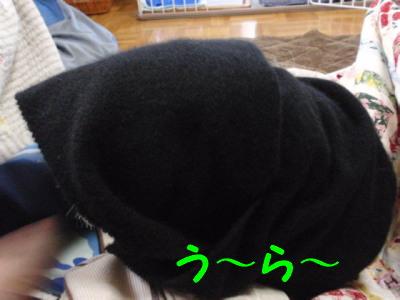 PB200965.jpg