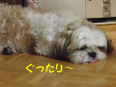 PC110497.jpg