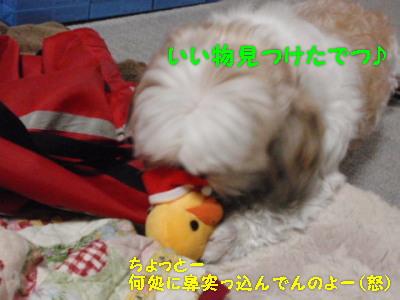 PC120515.jpg