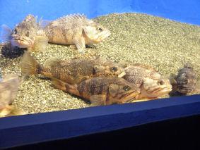 静止する魚達