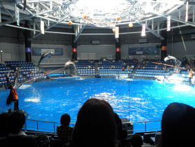 イルカ皆でジャンプ