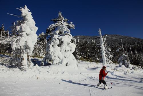 樹氷コース