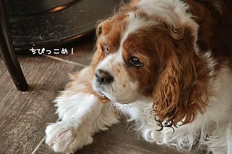 1-11_20090803184340.jpg