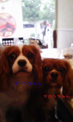11-6_20090810202235.jpg