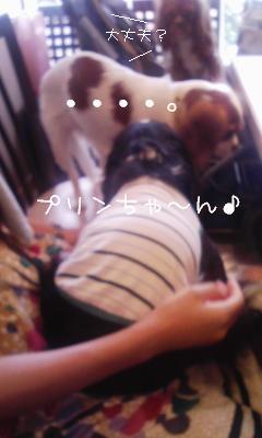 11-8_20090810204714.jpg