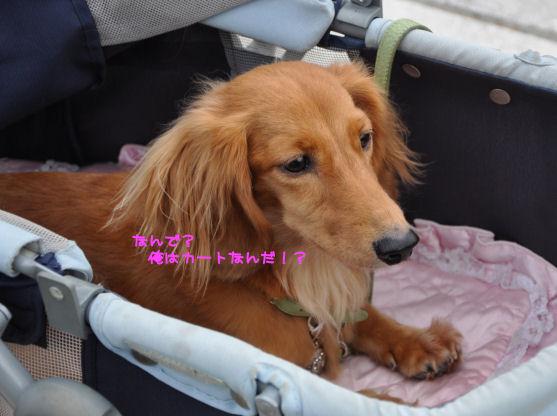 12_20090918110126.jpg
