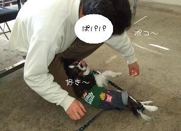 ぽこ1-9