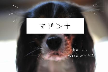 ぽこ1-14