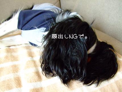 3_20090504182552.jpg