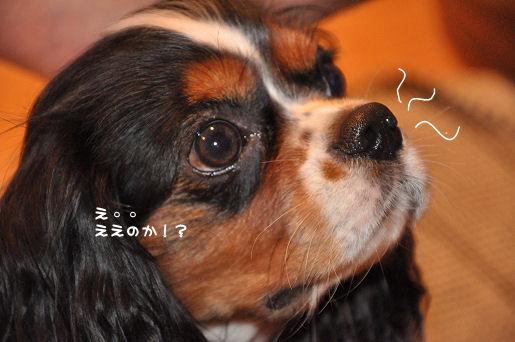 5_20091005175201.jpg