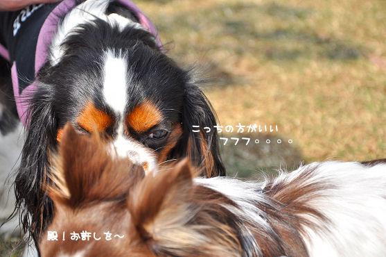 6_20090925130222.jpg