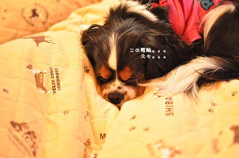 8_20091028210936.jpg