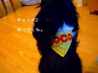 DSCF9072.jpg