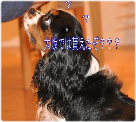 _4_20090701094638.jpg