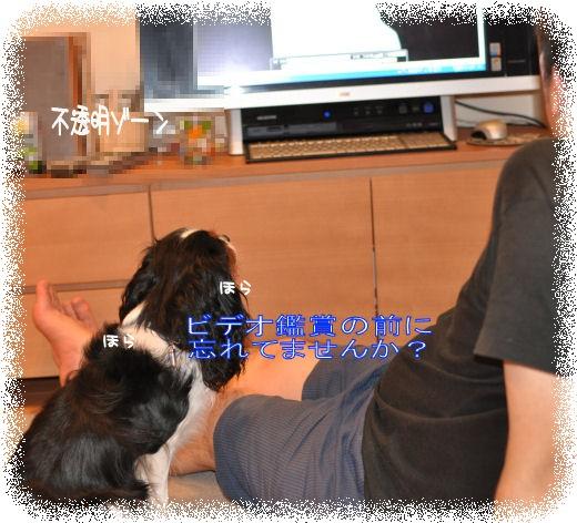_7_20090701094658.jpg