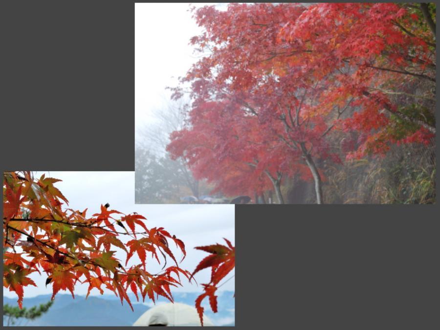 鳳来寺山の紅葉イメージ1