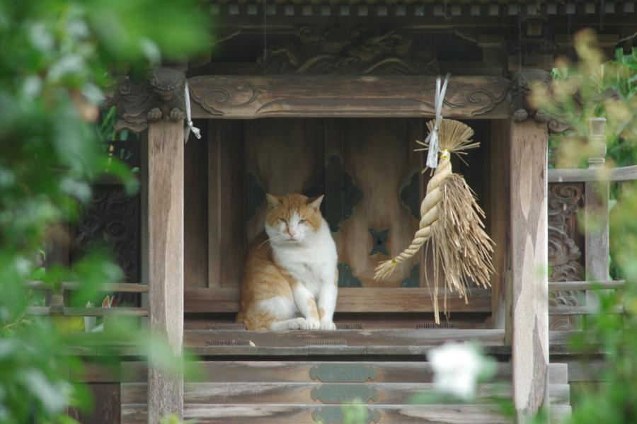 屋敷神と猫