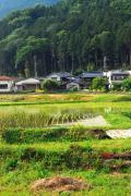 草刈竜(新種)2