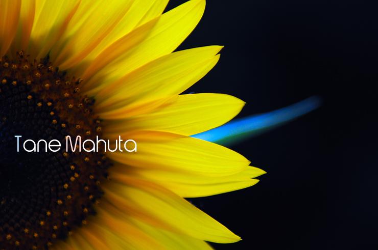 0808Himawari.jpg