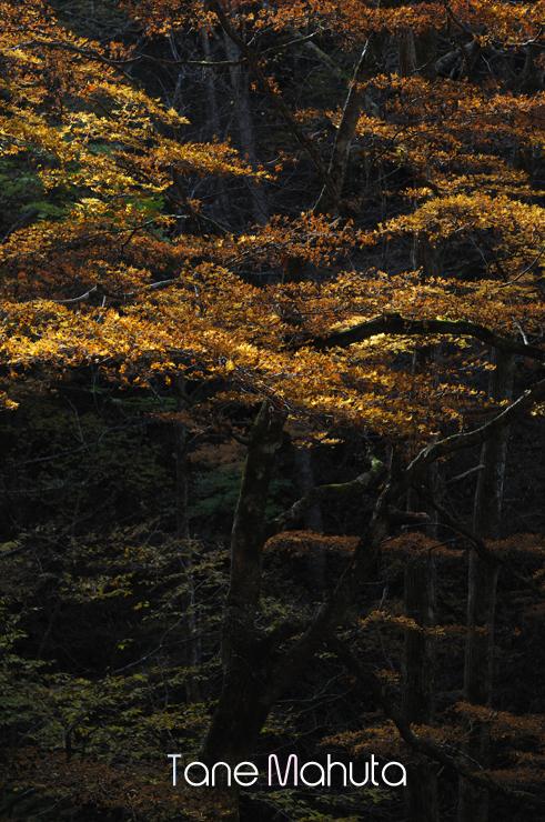 081103Nishizawa_1552.jpg