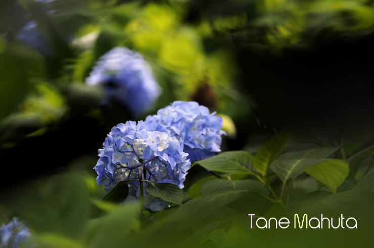 090607Toshimaen_037.jpg