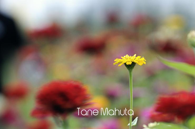 0908Yamanaka_21.jpg