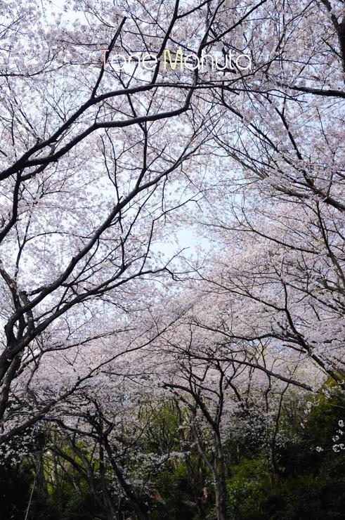 Goten_yama.jpg
