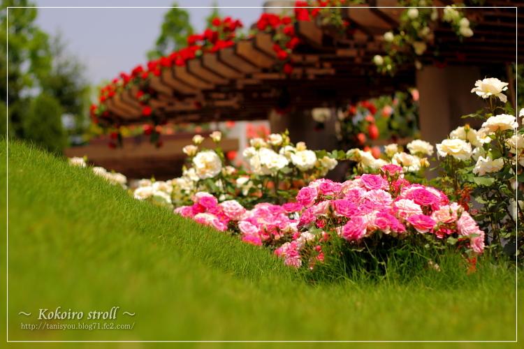 あくら薔薇園。