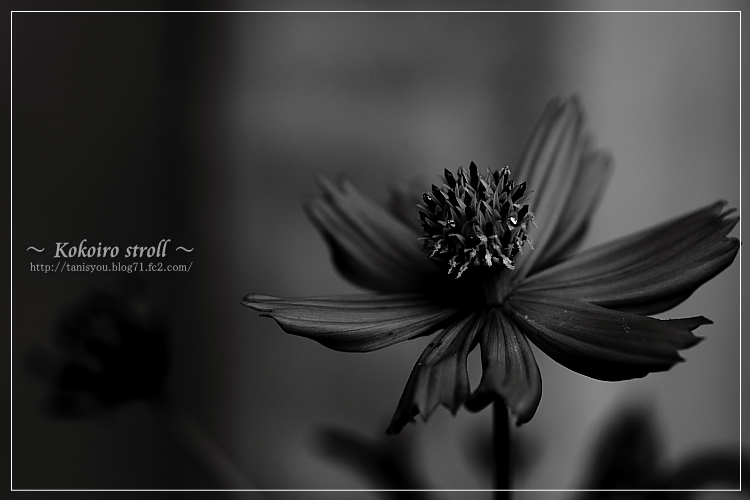 足の下の花