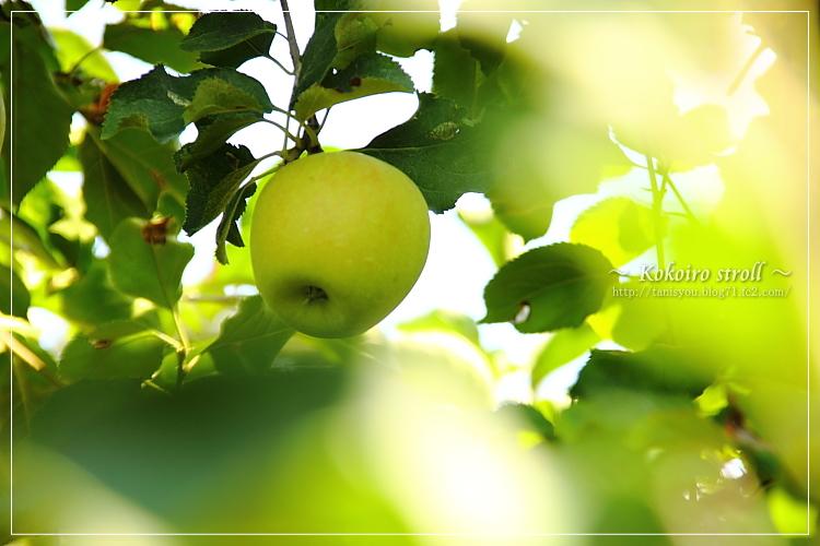 リンゴ園。