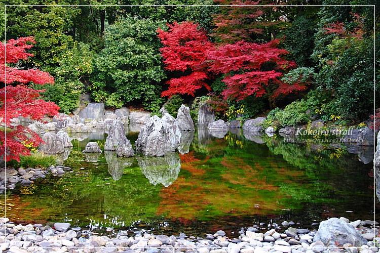 庭園の池1