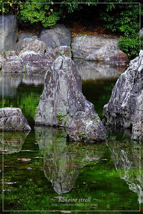 庭園の池3