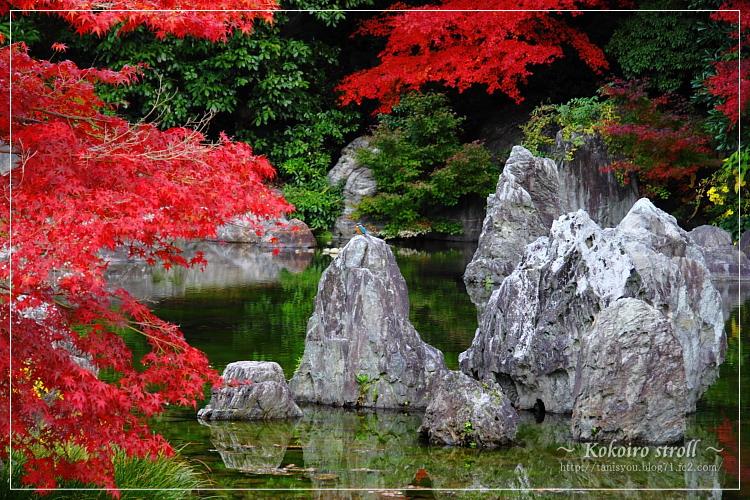 庭園の池2