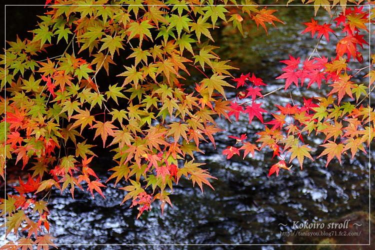紅葉と川2