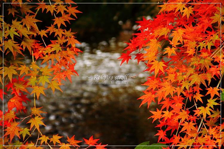 紅葉と川1