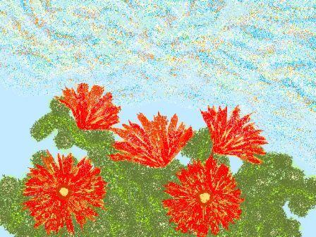 *サボテンの花