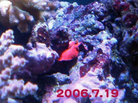 20060719red-1.jpg