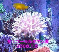 20080105LEFT.jpg